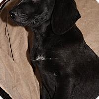 Adopt A Pet :: Otto - Hayes, VA