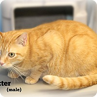 Adopt A Pet :: Baxter - Glen Mills, PA