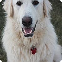 Adopt A Pet :: Rogue - Tulsa, OK