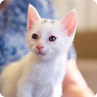 Adopt A Pet :: Winchester - Marietta, GA