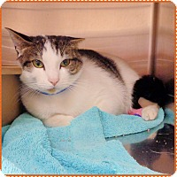 Adopt A Pet :: SEBASTIAN - Marietta, GA