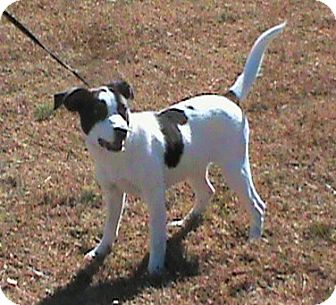 Terrier (Unknown Type, Medium)/Beagle Mix Dog for adoption in Maynardville, Tennessee - Paris