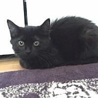 Adopt A Pet :: Chelsea - Boston, MA