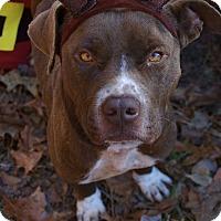Adopt A Pet :: Frank - Bishopville, SC