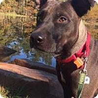 Adopt A Pet :: Milo - Santa Fe, TX