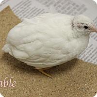 Adopt A Pet :: Fable - Bradenton, FL