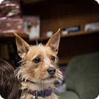 Adopt A Pet :: Milly - Fresno, CA