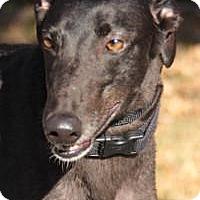 Adopt A Pet :: Rancho - Nashville, TN