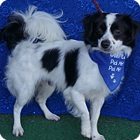 Adopt A Pet :: Timothy - Buena Park, CA