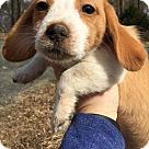 Adopt A Pet :: Baby Lyra