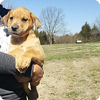 Adopt A Pet :: Tundra - Glastonbury, CT