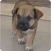 Adopt A Pet :: Star (adoption pending) - Phoenix, AZ