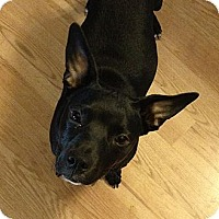Adopt A Pet :: Nala - Orlando, FL