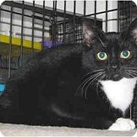 Adopt A Pet :: Gloria - Colmar, PA