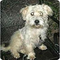 Adopt A Pet :: Gallagher - Kingwood, TX