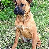 Adopt A Pet :: *Daphne - PENDING - Westport, CT