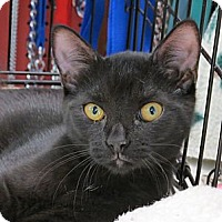Adopt A Pet :: Buttons - Raritan, NJ