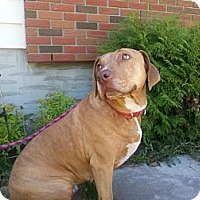Adopt A Pet :: Cali - Calgary, AB