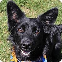 Adopt A Pet :: Mighty Max - Homewood, AL