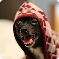 Adopt A Pet :: Liam - Romeoville, IL