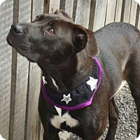 Adopt A Pet :: Glenda - Richmond, VA