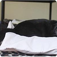 Adopt A Pet :: Frisco - Boca Raton, FL