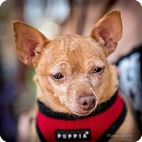 Adopt A Pet :: Lil Deb - San Marcos, CA