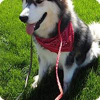 Adopt A Pet :: Kane - Ogden, UT