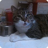 Adopt A Pet :: mason - Muskegon, MI