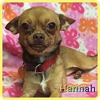 Adopt A Pet :: Hannah - Hollywood, FL