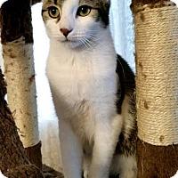 Adopt A Pet :: Star - Long Beach, CA