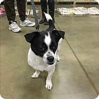 Adopt A Pet :: Max - West Columbia, SC