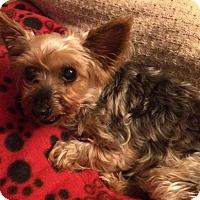 Adopt A Pet :: Poppie - Lakewood, CO