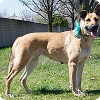 Adopt A Pet :: Arabella-Kp Litter - Livonia, MI