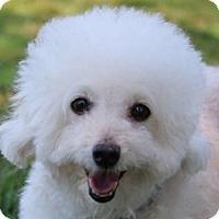 Adopt A Pet :: Mikey - La Costa, CA