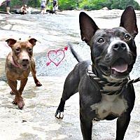 Adopt A Pet :: Antonin (aka Poncho) - Walton County, GA