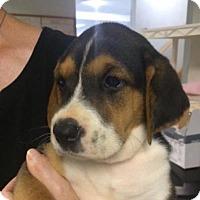 Adopt A Pet :: Katie - Barnegat, NJ