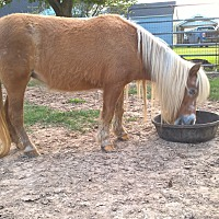 Adopt A Pet :: Belinda - Hitchcock, TX
