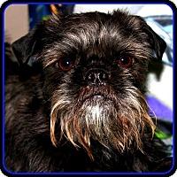 Adopt A Pet :: FINLEY in Jasper, IN. - Seymour, MO