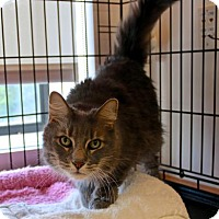 Adopt A Pet :: Mister - Gloucester, MA