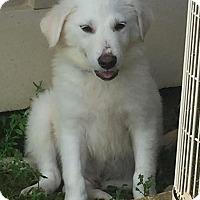 Adopt A Pet :: Matthew - New Canaan, CT