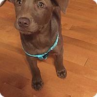 Adopt A Pet :: Julie - Hazard, KY