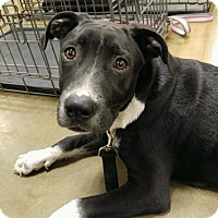 Adopt A Pet :: Cal-NEW LEASH ON LIFE - Snow Hill, NC