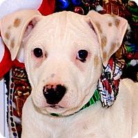 Adopt A Pet :: Frosty - Glastonbury, CT