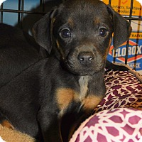 Adopt A Pet :: Brady and Braxton - mooresville, IN