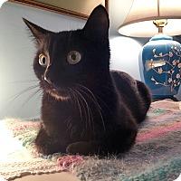 Adopt A Pet :: Maresh - Mississauga, Ontario, ON
