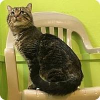 Adopt A Pet :: Ceptimus - Janesville, WI