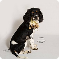 Adopt A Pet :: KENNEL 38 - Corona, CA