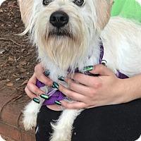 Adopt A Pet :: Elsa - Atlanta, GA