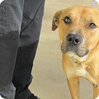 Adopt A Pet :: Arnie - Rocky Mount, NC